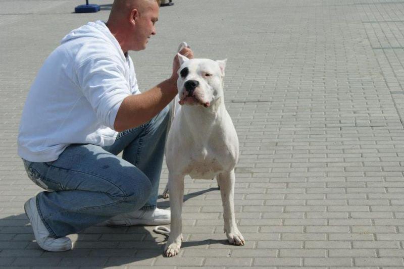 Szczenięta Dogo Argentino FCI