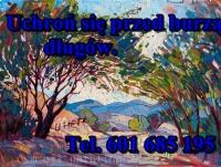 Kupię każdą spółkę z leasingiem. Tel. 601-685-195