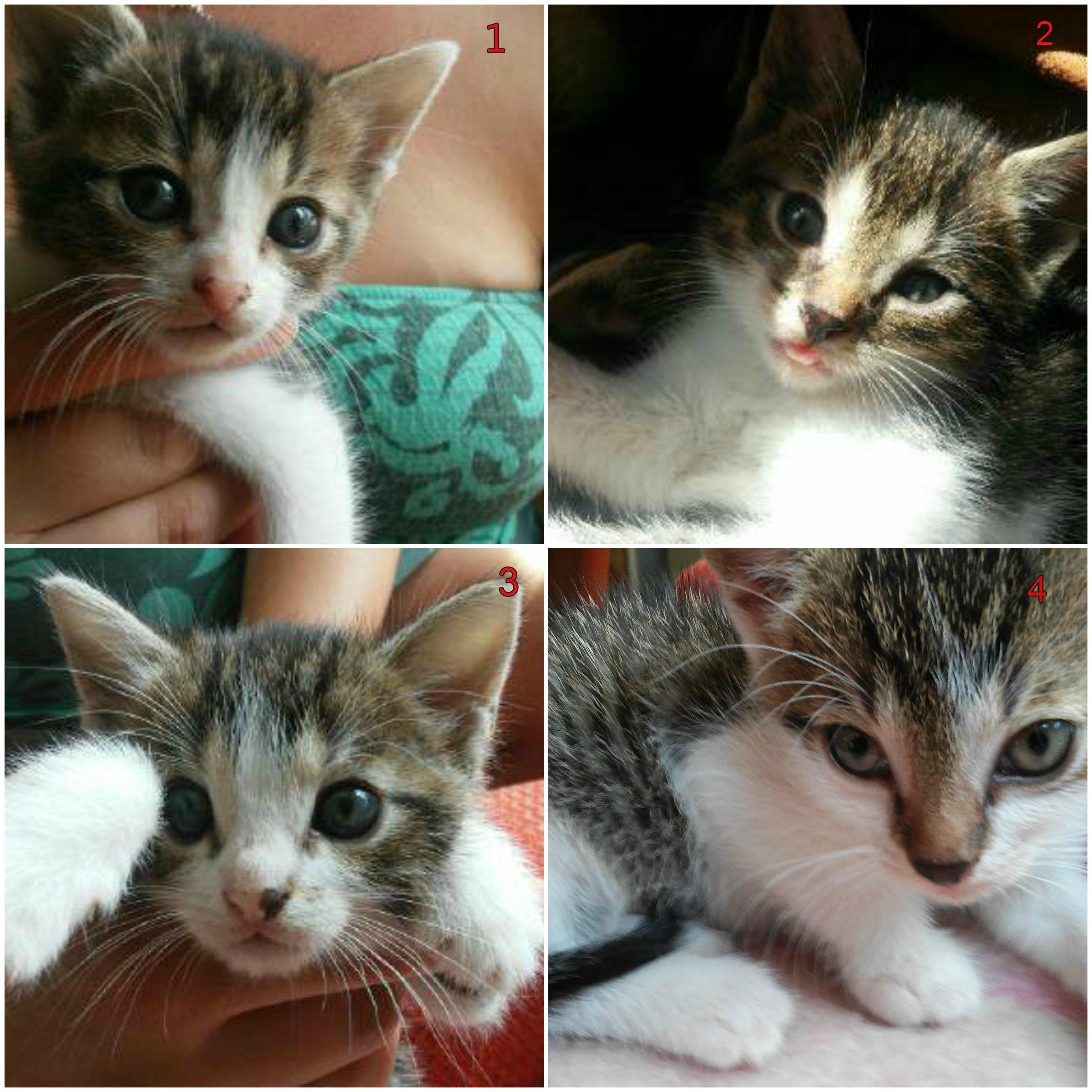 Oddam 4 małe kotki w dobre ręce