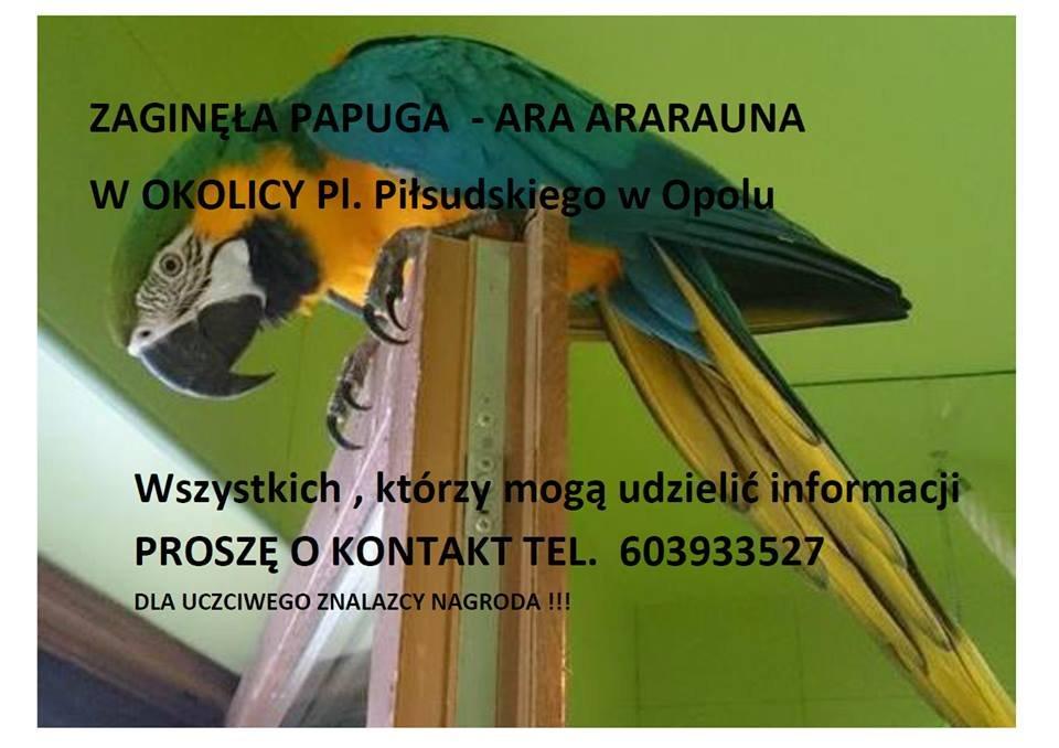 Zaginęła papuga Ara Ararauna